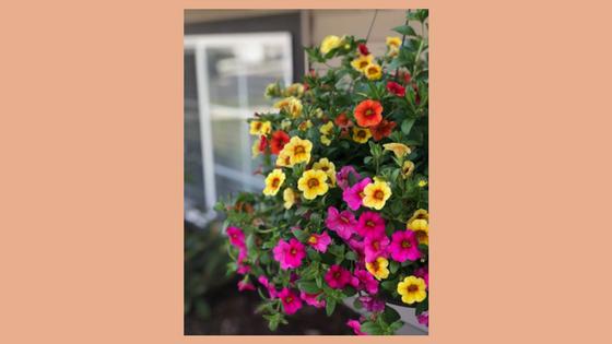 hanging flowers.jpg